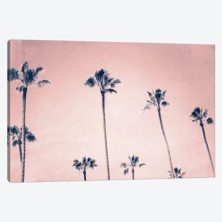 Palms Canvas Print #MPH108} by MScottPhotography Art Print