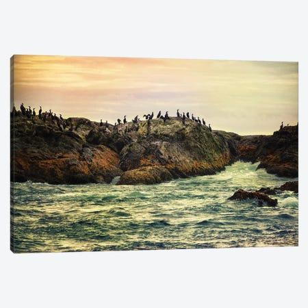 Bird Rock Tofino Canvas Print #MPH10} by MScottPhotography Canvas Artwork
