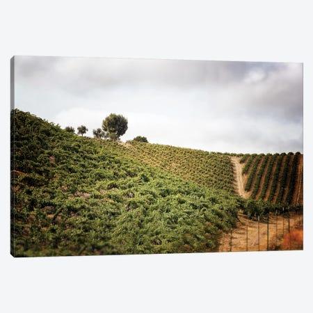 Paso Robles Canvas Print #MPH110} by MScottPhotography Canvas Art