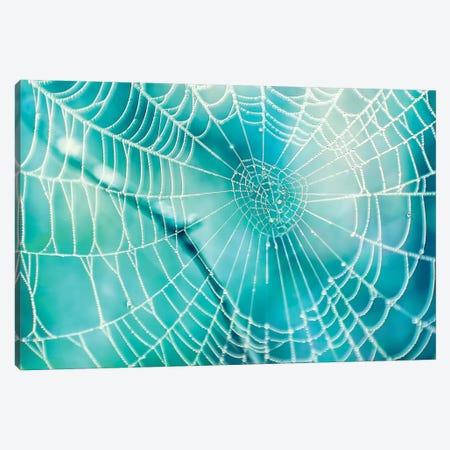Spider Web Canvas Print #MPH136} by MScottPhotography Canvas Art Print