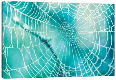 Spider Web Canvas Art Print