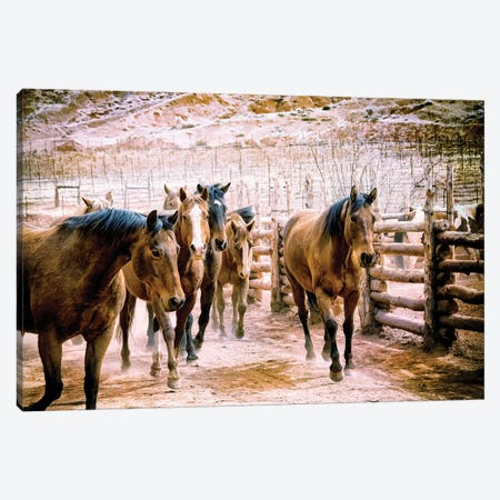 Stampede Canvas Print #MPH140} by MScottPhotography Canvas Art Print