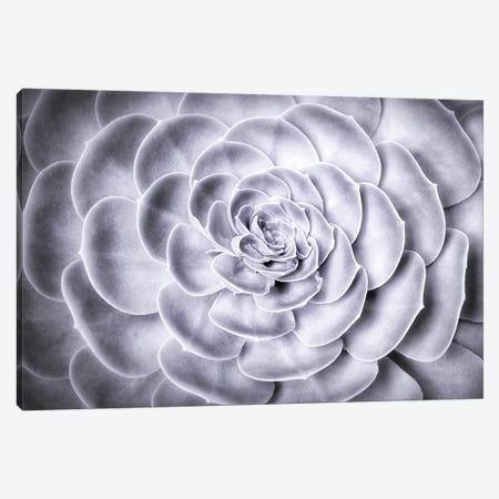 Succulent Canvas Print #MPH142} by MScottPhotography Art Print