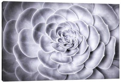 Succulent Canvas Art Print