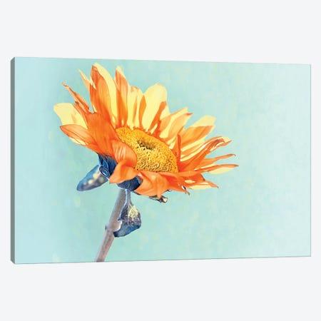 Sunflower Canvas Print #MPH143} by MScottPhotography Canvas Art Print