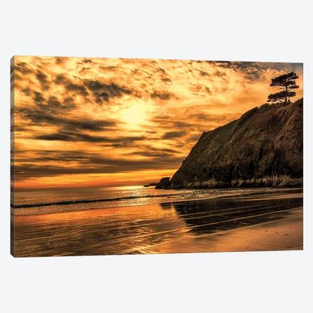 Sunset Pine Canvas Print #MPH145} by MScottPhotography Canvas Wall Art