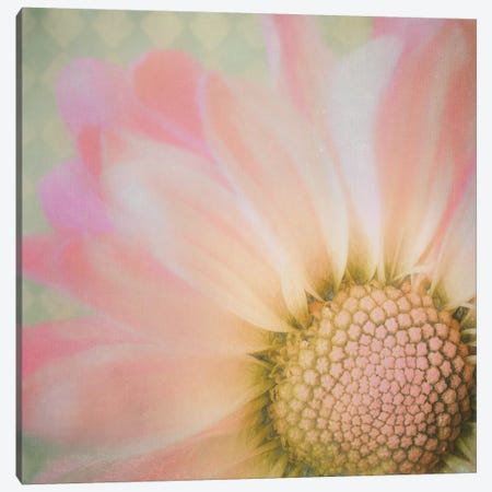 Sweet Daisy Canvas Print #MPH146} by MScottPhotography Canvas Art