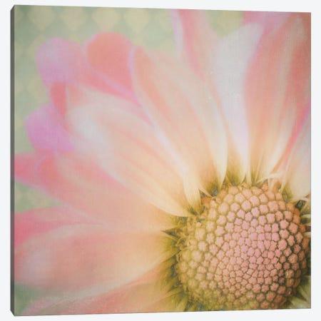 Sweet Daisy Canvas Print #MPH146} by MScottPhotography Canvas Art