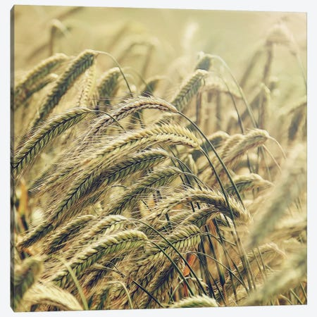 Wheat Canvas Print #MPH164} by MScottPhotography Canvas Artwork