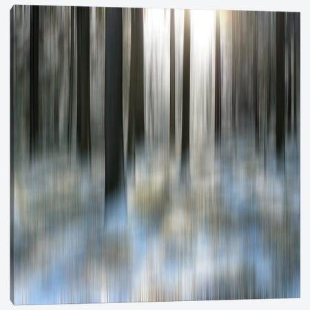 Winter Solstice Canvas Print #MPH167} by MScottPhotography Canvas Art