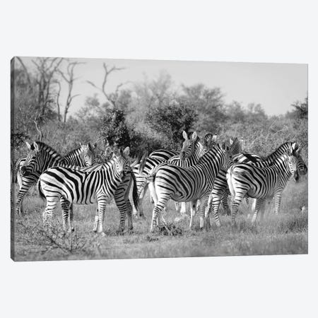 Zebras Canvas Print #MPH171} by MScottPhotography Canvas Wall Art
