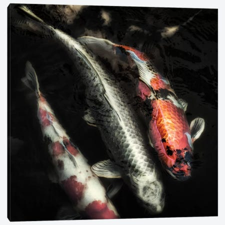 Don't Be Koi Canvas Print #MPH25} by MScottPhotography Canvas Artwork