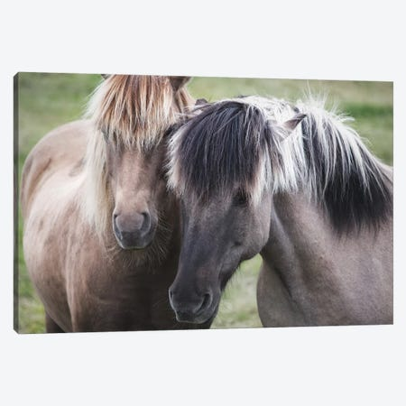 Dynamic Duo Canvas Print #MPH29} by MScottPhotography Canvas Art Print