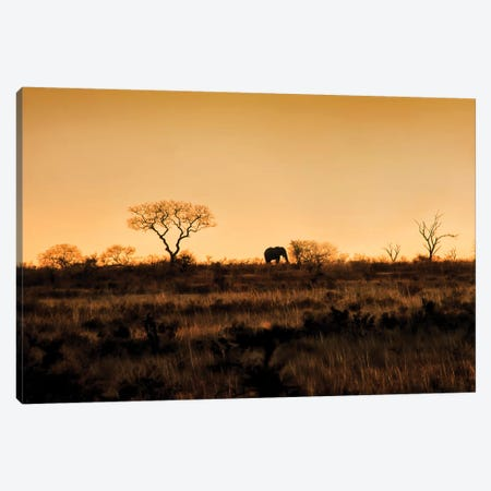 Elephant Silhouette Canvas Print #MPH33} by MScottPhotography Canvas Art