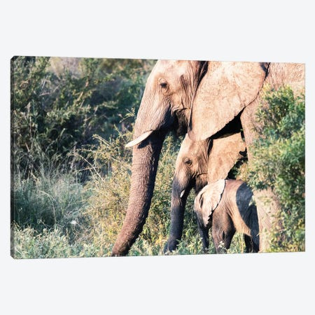 Elephant Trio Canvas Print #MPH34} by MScottPhotography Art Print