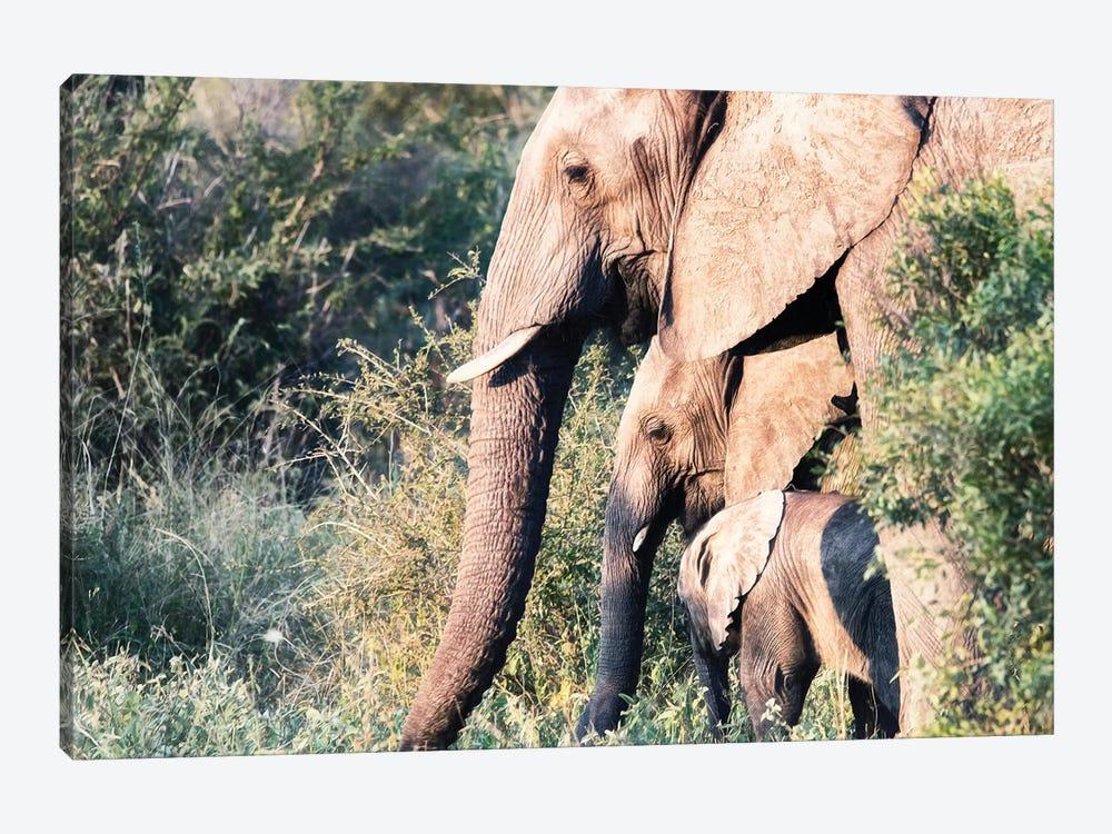 Elephant Trio by MScottPhotography 1-piece Canvas Print