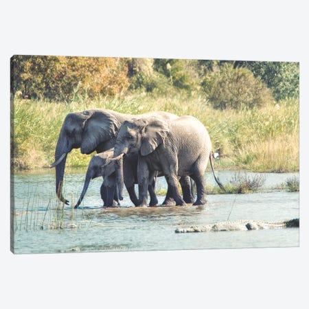Elephant Trio II Canvas Print #MPH35} by MScottPhotography Art Print