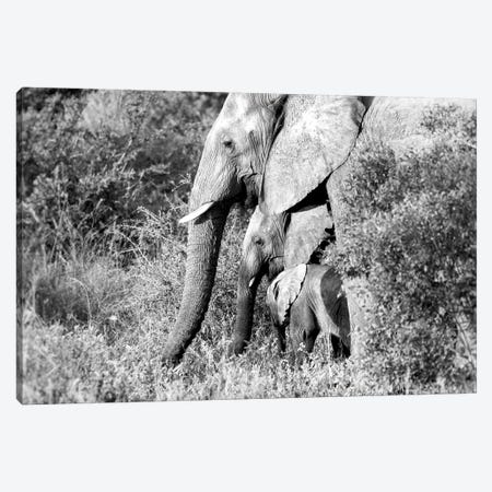 Elephant Trio In Black And White Canvas Print #MPH36} by MScottPhotography Canvas Print