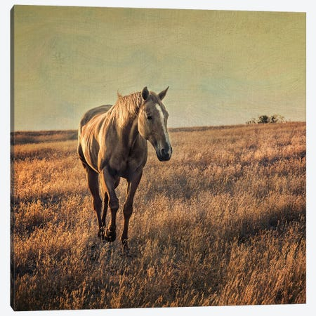 Equine Canvas Print #MPH37} by MScottPhotography Art Print
