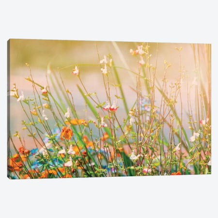 Field of Flowers Canvas Print #MPH40} by MScottPhotography Art Print