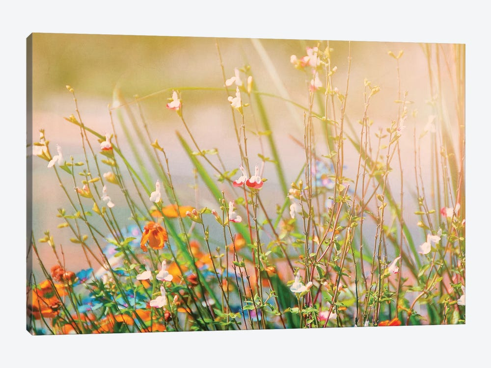 Field of Flowers by MScottPhotography 1-piece Canvas Wall Art