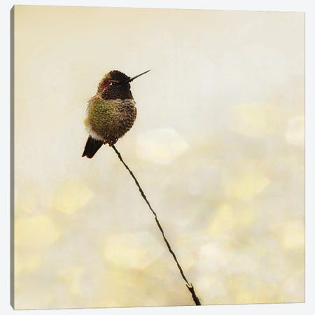 Hummingbird Canvas Print #MPH62} by MScottPhotography Canvas Art Print