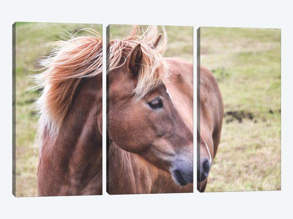 Icelandic Pony by MScottPhotography 3-piece Canvas Wall Art