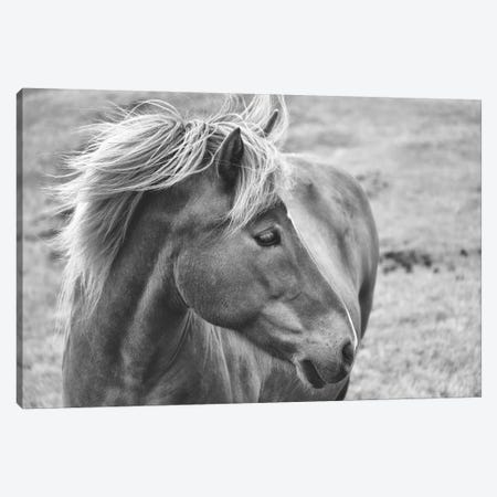 Icleandic Pony In Black And White Canvas Print #MPH65} by MScottPhotography Canvas Artwork