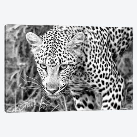 Leopard Close Up In Black And White Canvas Print #MPH72} by MScottPhotography Canvas Wall Art