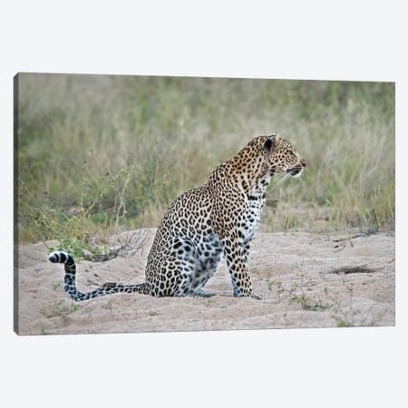 Leopard Canvas Print #MPH73} by MScottPhotography Canvas Wall Art