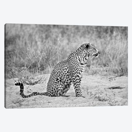 Leopard In Black And White Canvas Print #MPH74} by MScottPhotography Canvas Print