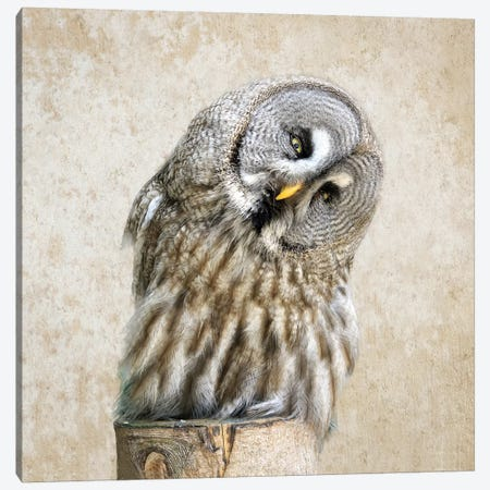 Barred Owl Canvas Print #MPH7} by MScottPhotography Canvas Print