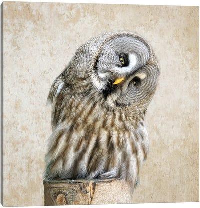 Barred Owl Canvas Art Print