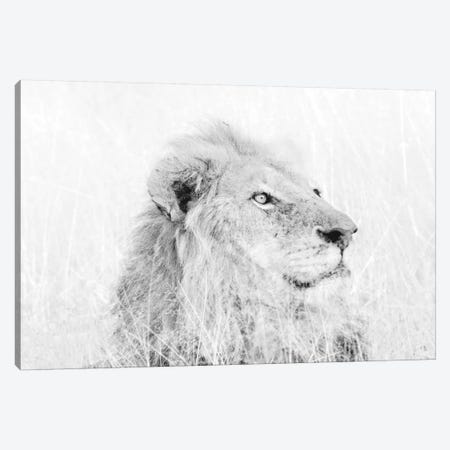 Male Lion High Key 3-Piece Canvas #MPH82} by MScottPhotography Canvas Print