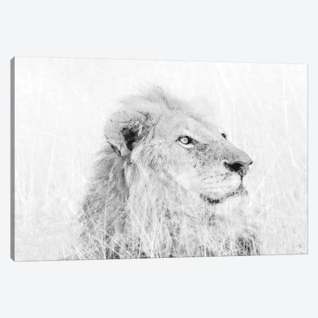 Male Lion High Key Canvas Print #MPH82} by MScottPhotography Canvas Print