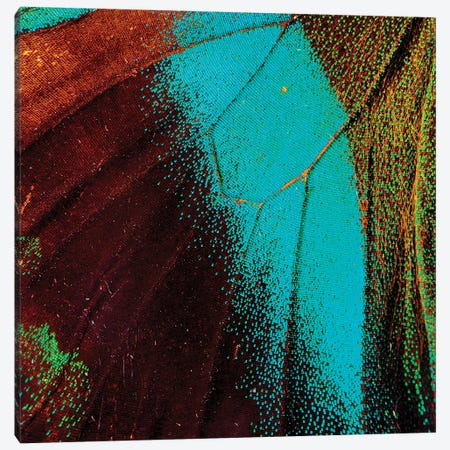 Shock Wave - Butterfly Canvas Print #MPN66} by Aaron McPolin Canvas Wall Art