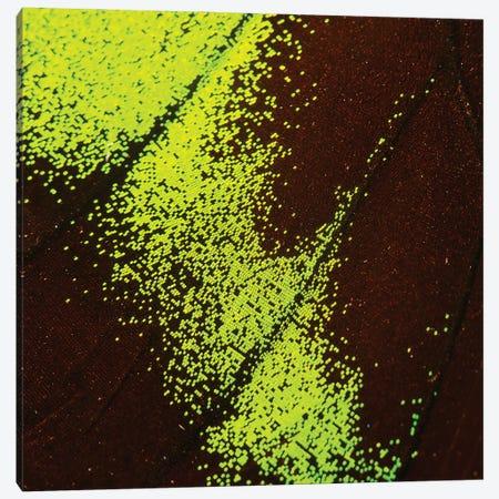 Borealis - Flutterby Canvas Print #MPN68} by Aaron McPolin Canvas Print