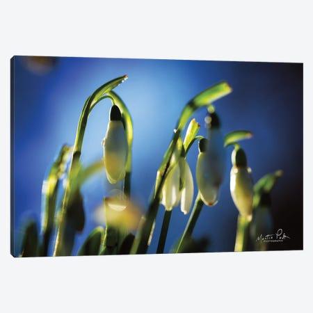 Snowdrops V Canvas Print #MPO103} by Martin Podt Canvas Artwork
