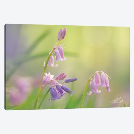 Bluebell I Canvas Print #MPO108} by Martin Podt Canvas Wall Art