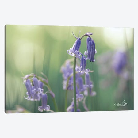 Bluebell II Canvas Print #MPO109} by Martin Podt Canvas Artwork