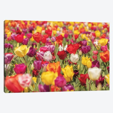 Colorful Bouquet Canvas Print #MPO123} by Martin Podt Canvas Artwork