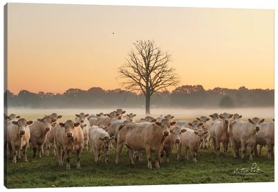 Just Come Cows And A Dead Tree Canvas Art Print