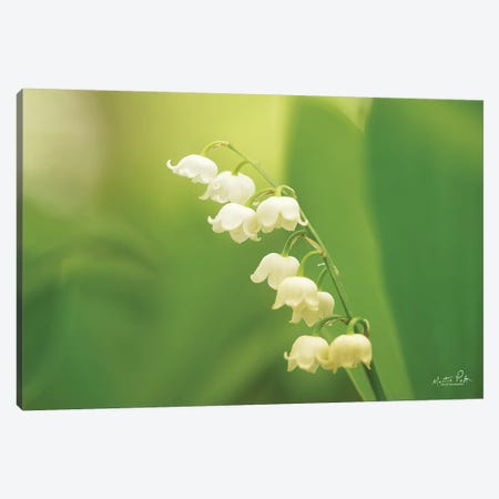 Lily Of The Valley Canvas Print #MPO127} by Martin Podt Art Print