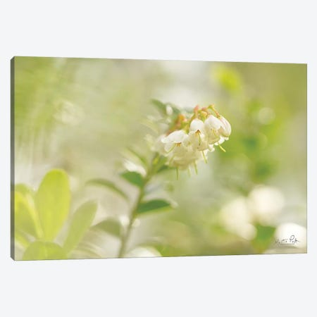 Lingonberry Canvas Print #MPO128} by Martin Podt Canvas Artwork
