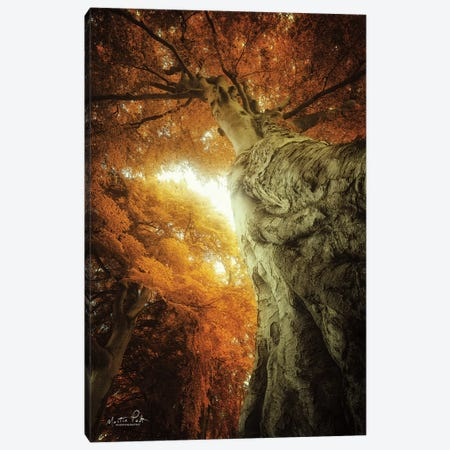 Look Up Autumn Canvas Print #MPO129} by Martin Podt Canvas Artwork