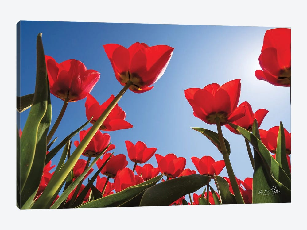 Look Up In Red by Martin Podt 1-piece Canvas Wall Art