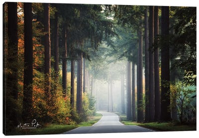 Mysterious Roads Canvas Art Print