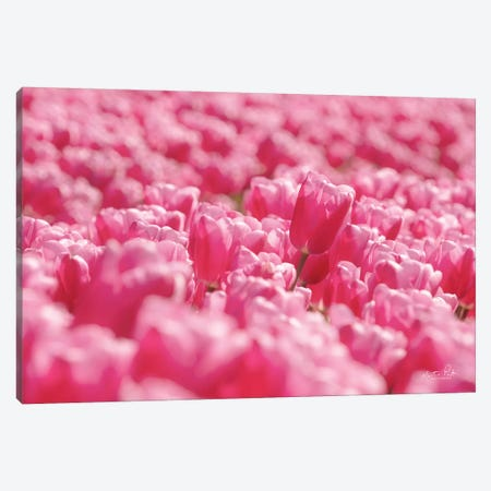 Pink Field Canvas Print #MPO135} by Martin Podt Canvas Wall Art