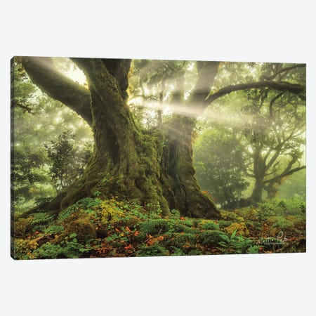One-Two Tree   Canvas Print #MPO146} by Martin Podt Canvas Print