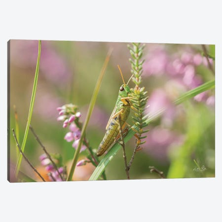 Grasshopper Canvas Print #MPO153} by Martin Podt Canvas Art Print